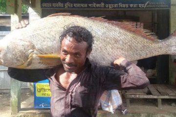 কক্সবাজারের টেকনাফে ৩৪ কেজির একটি পোয়া মাছ ধরে আট লাখ টাকায় বিক্রি | তিন জেলে এখন লাখপতি | 2
